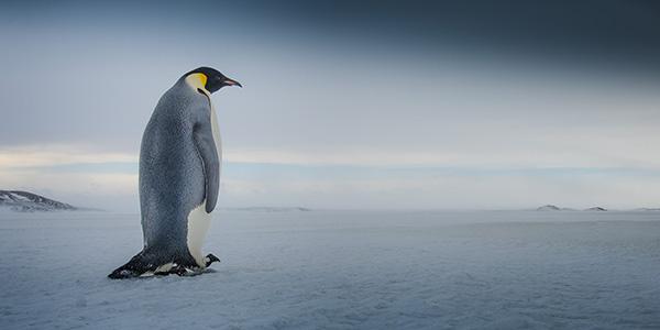 google-penguin-update-thumbnail