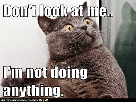 cat social media